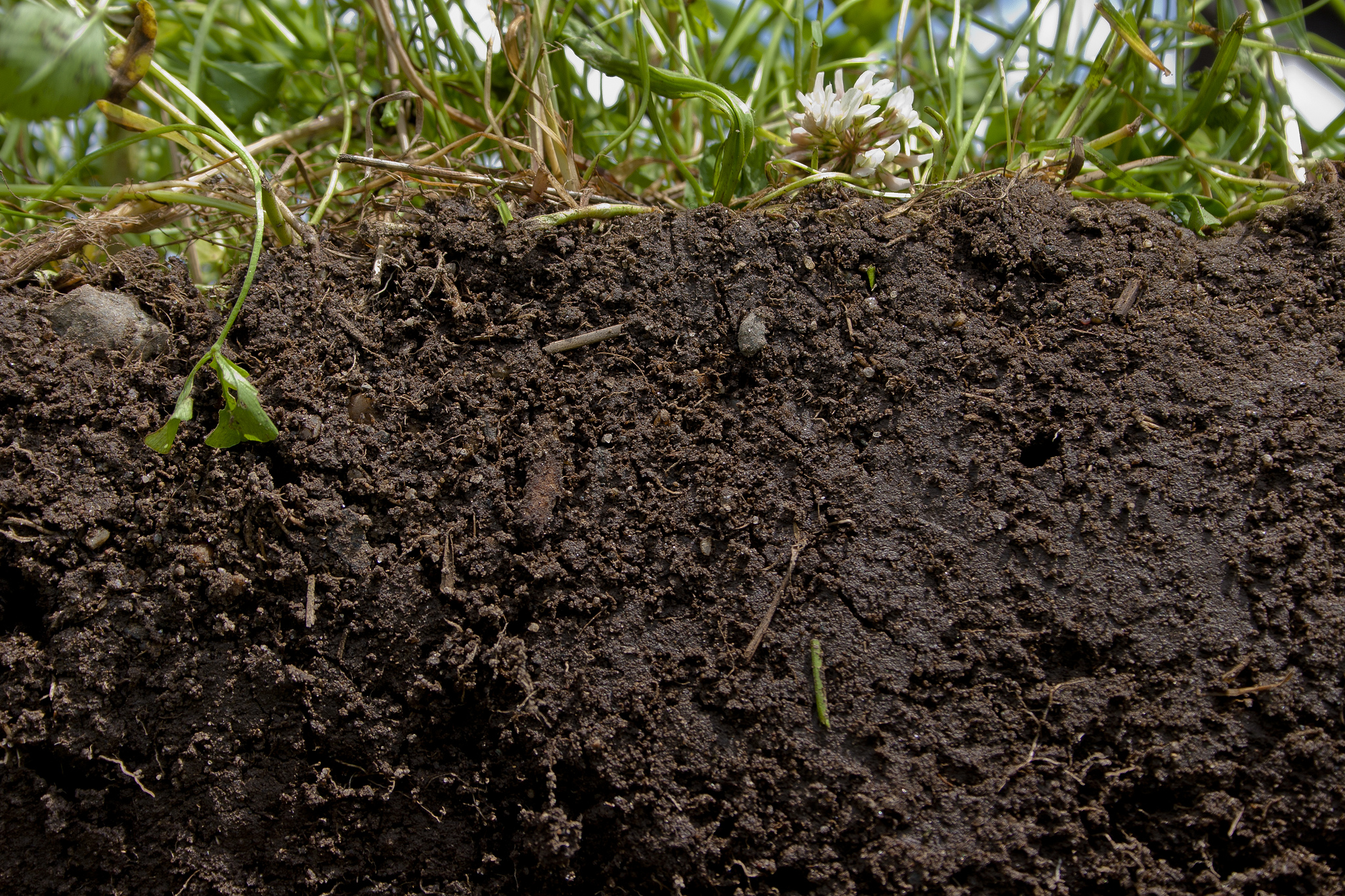 Healthy soil healthy food pure advantage for Things in soil