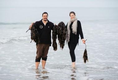 Tane-Bradley-Seaweed-Harvest
