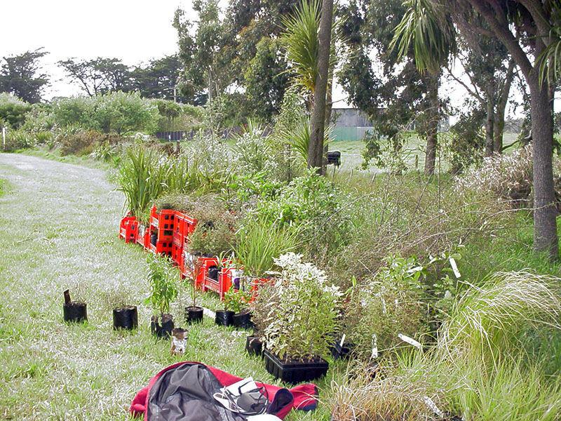 Riparian planting: plants ready to take to the Ngai Tahu stream.