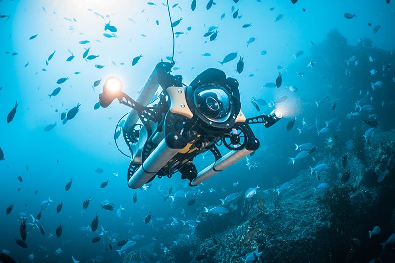 boxfish_rov_dive_2