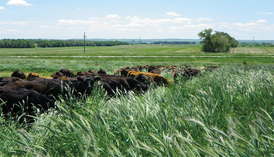 Farming For Resilience