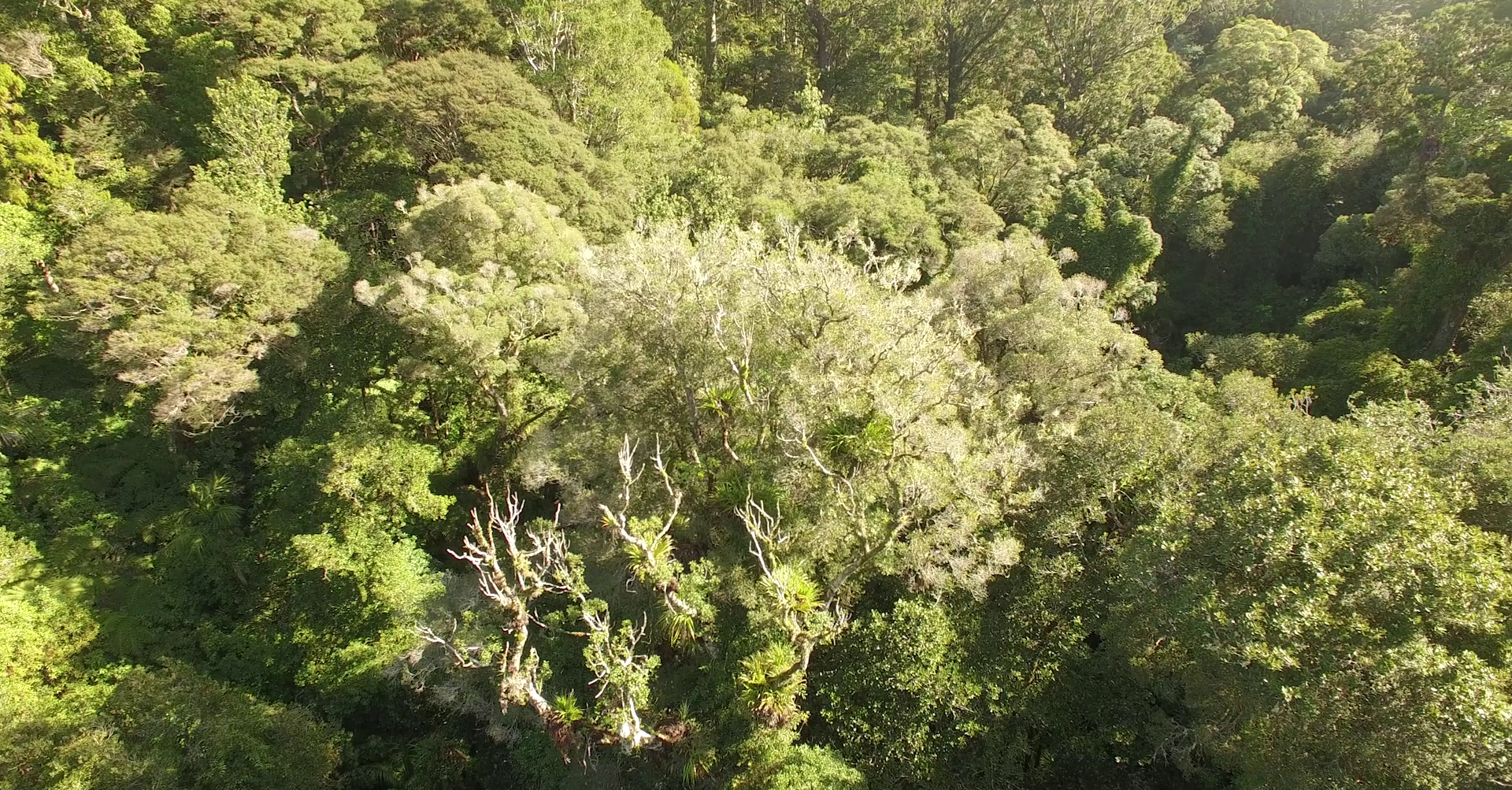 Native forest collapse feeds climate change