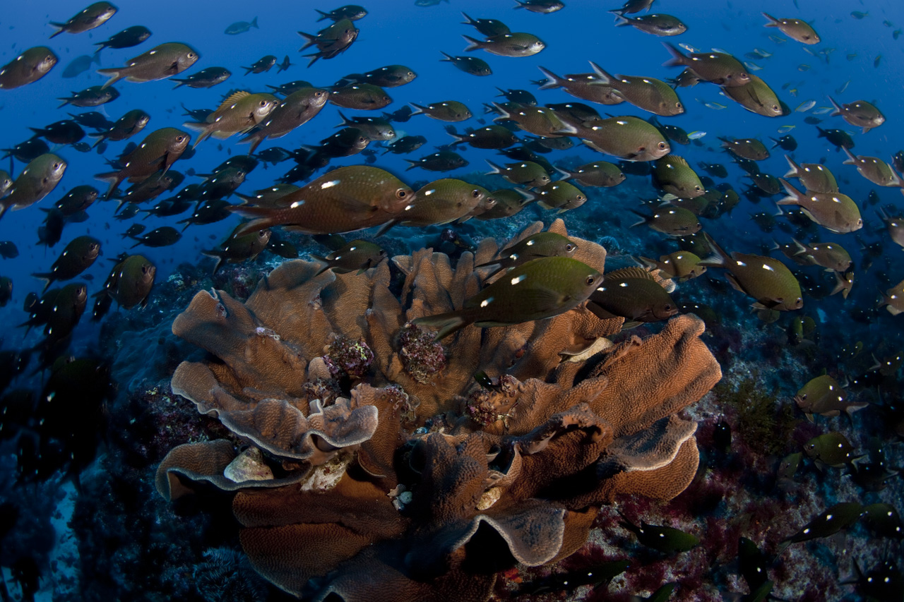 Fishing the Line- Marine Protected Areas a win for ecology and economy