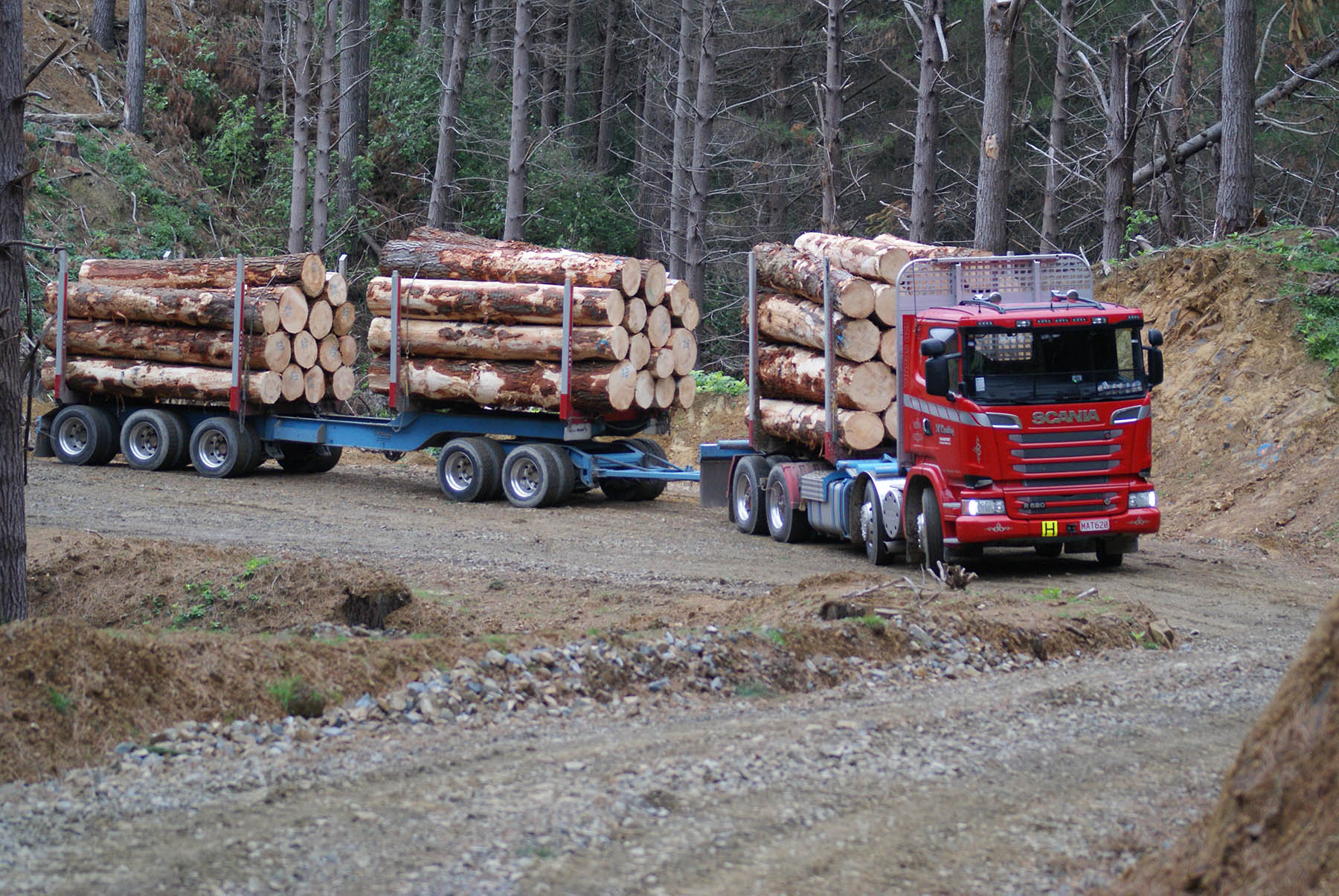 Wood – the new wool?