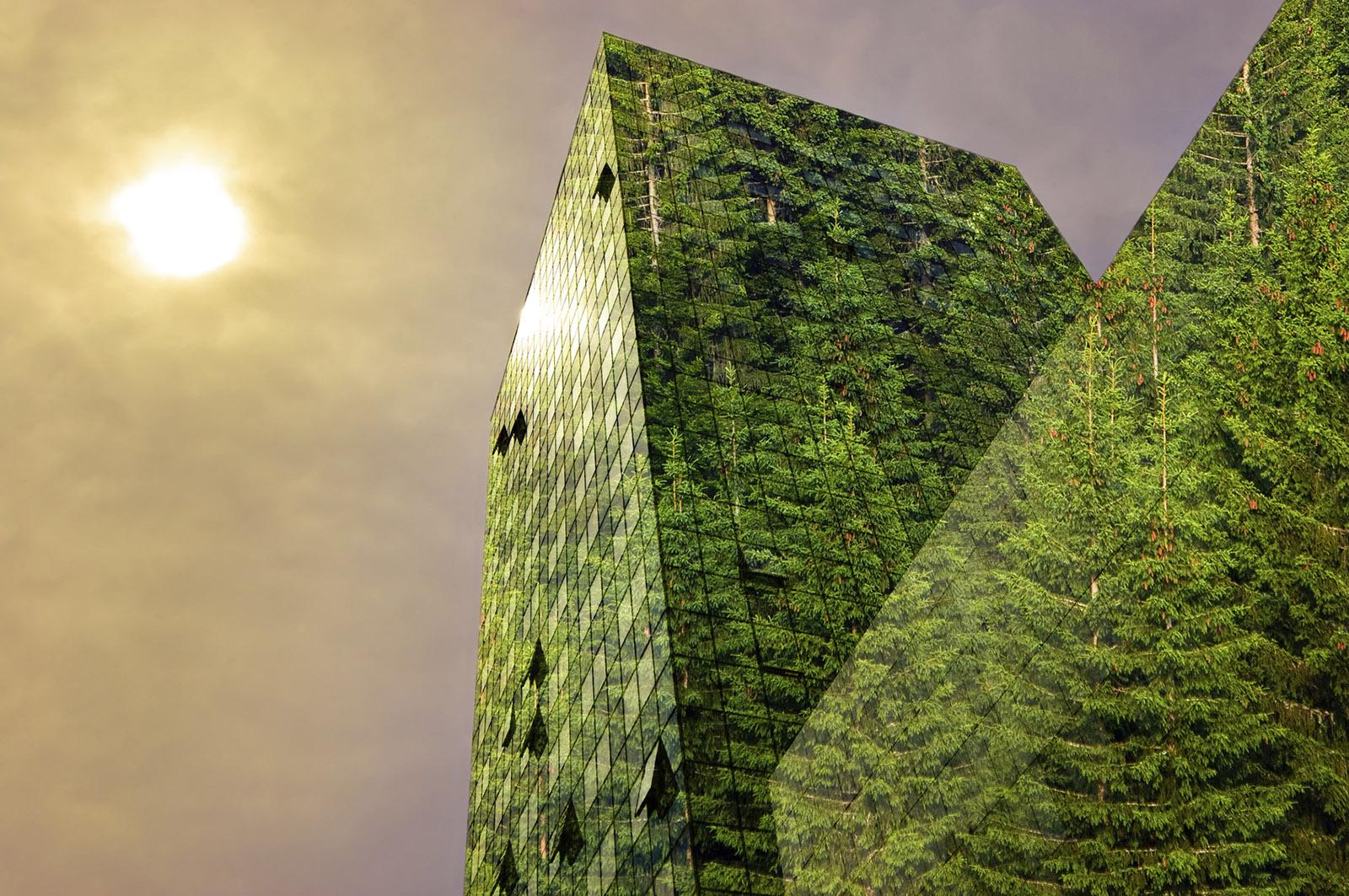 Optimised Engineered Lumber – OEL™ Reengineering the Built Environment