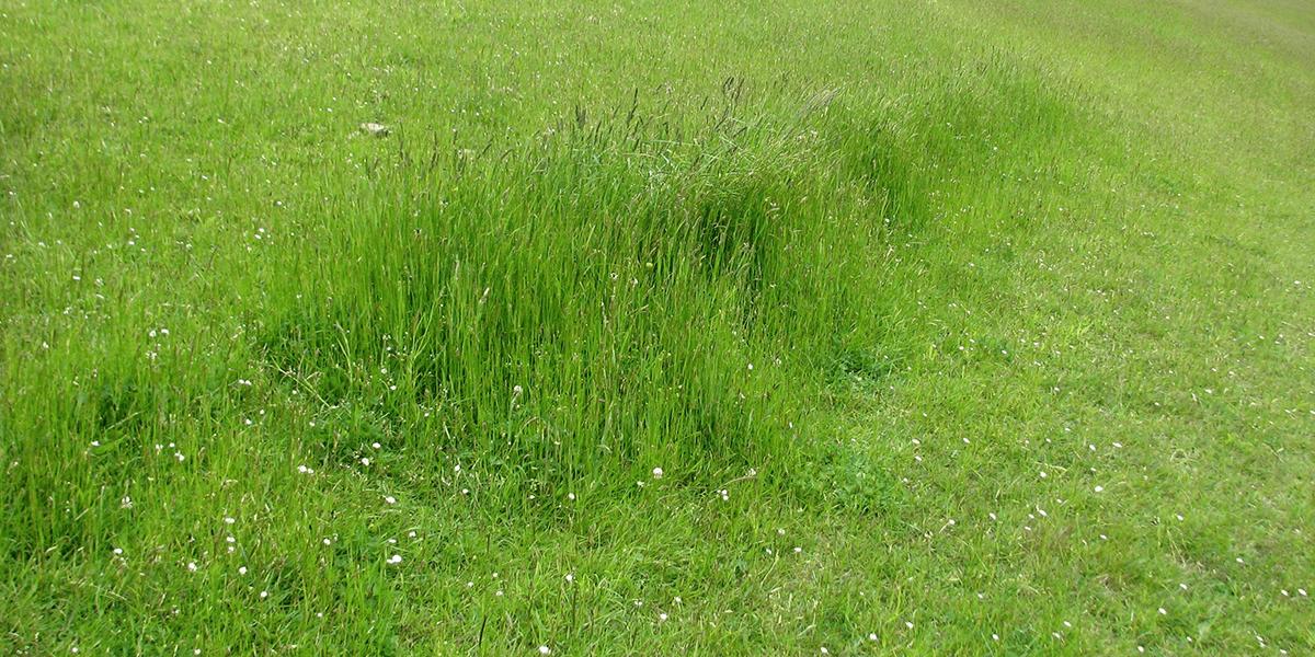 Agro-Ecology Vs Agribusiness