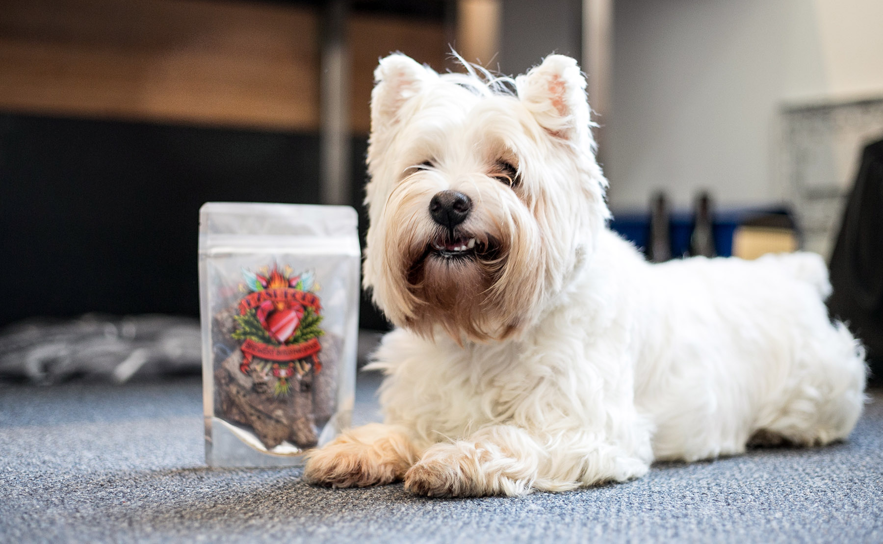 Garage Project goes Circular with Mashbone for Dogs
