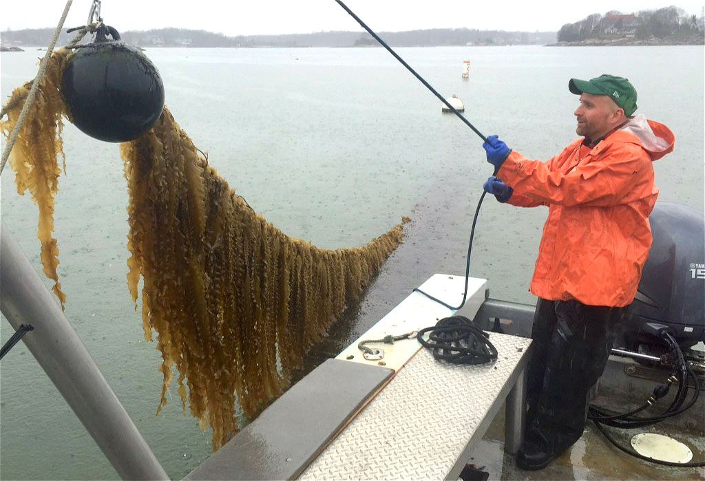 There's more to seaweed than just a superfood - Pure Advantage