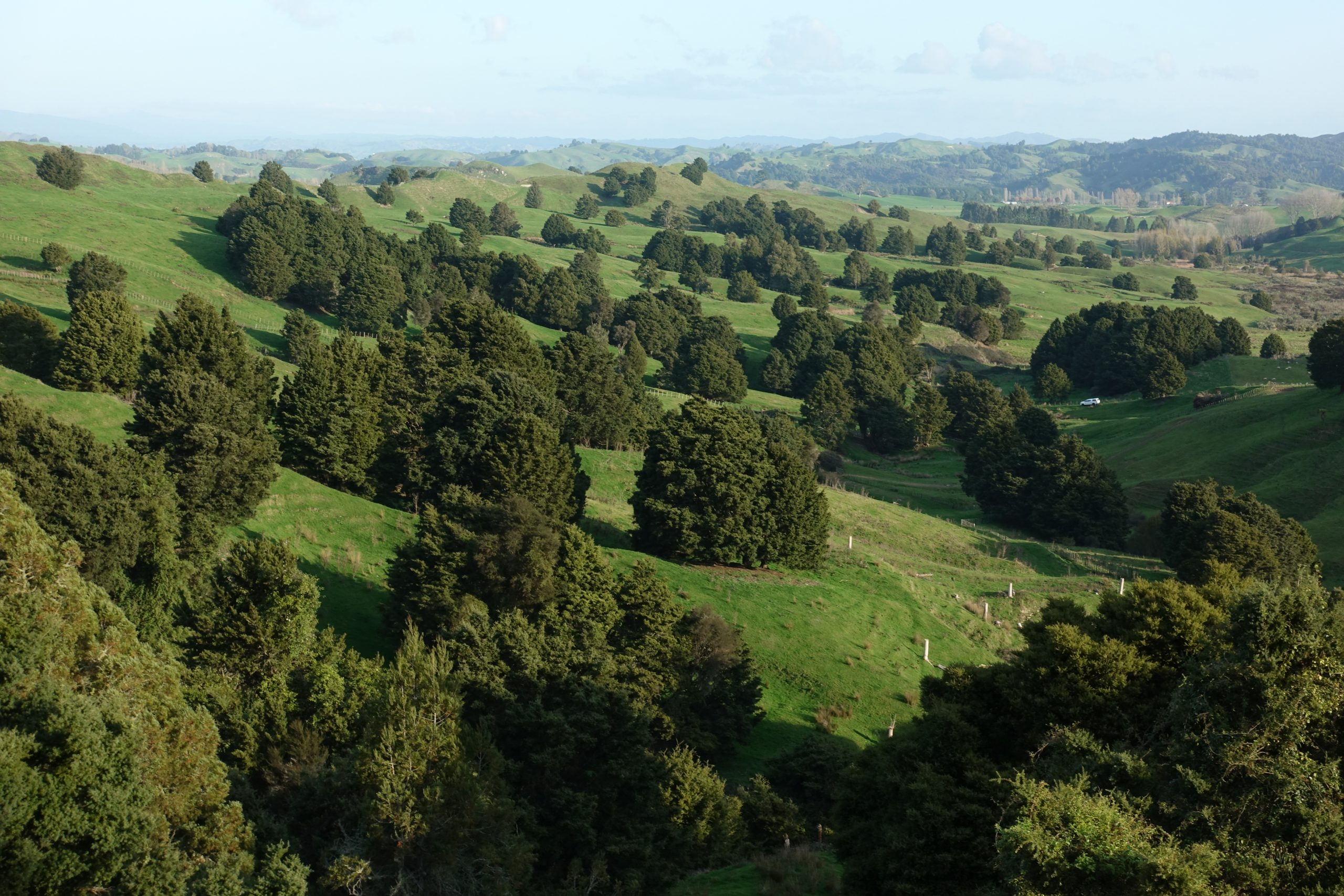 The Importance of Native Trees in Agroecosystems