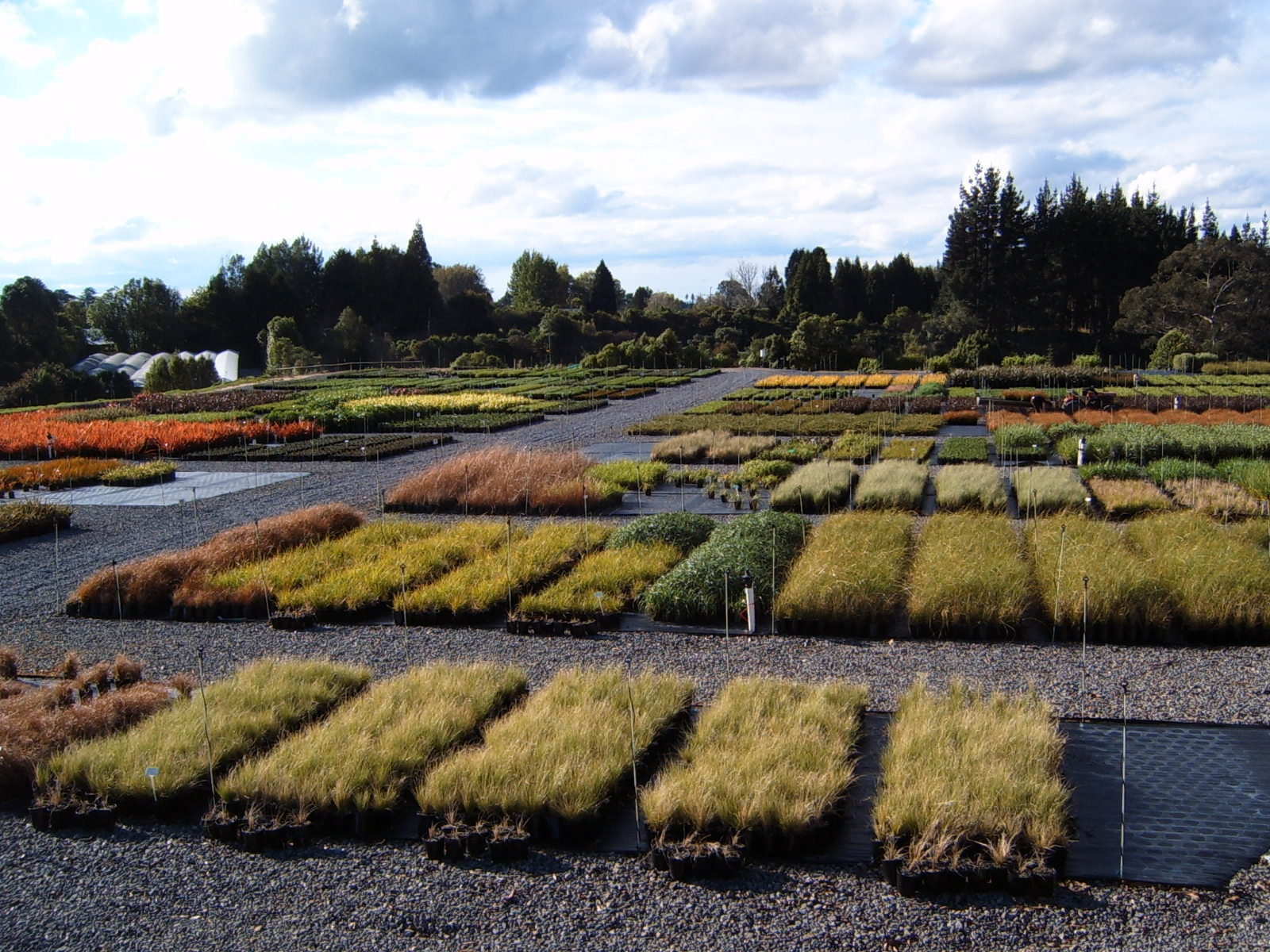 The State of the Native Plant Nursery Industry in 2021