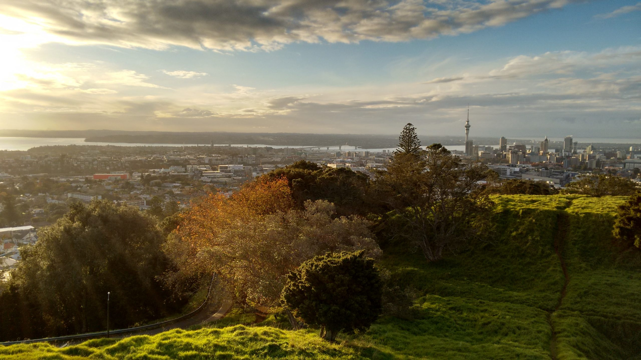 Urban Trees and the Auckland Ngāhere Strategy